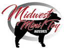 Midwest MiniToy Aussies